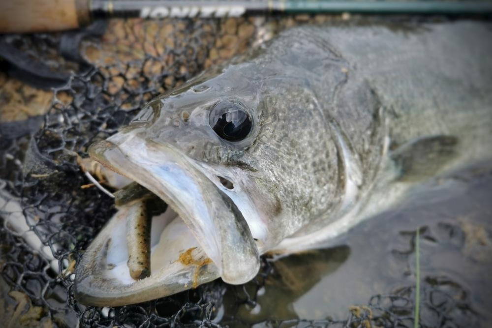 bass fishing trd zman