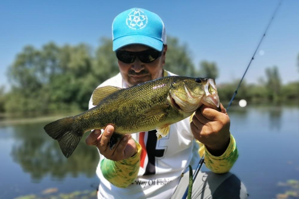 josip pecigos bass fishing