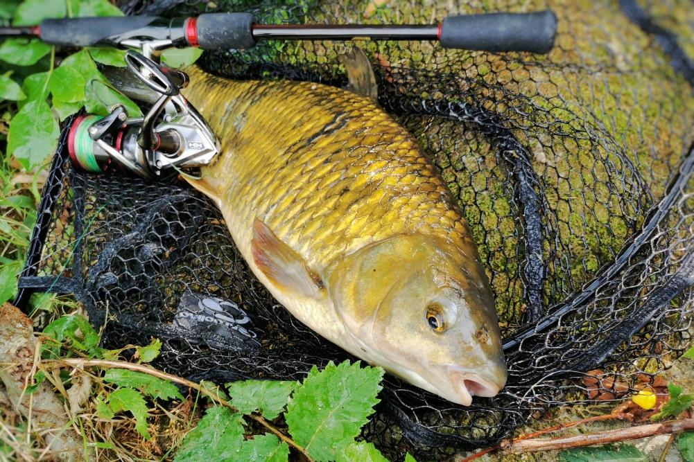 plotica ribolov 2