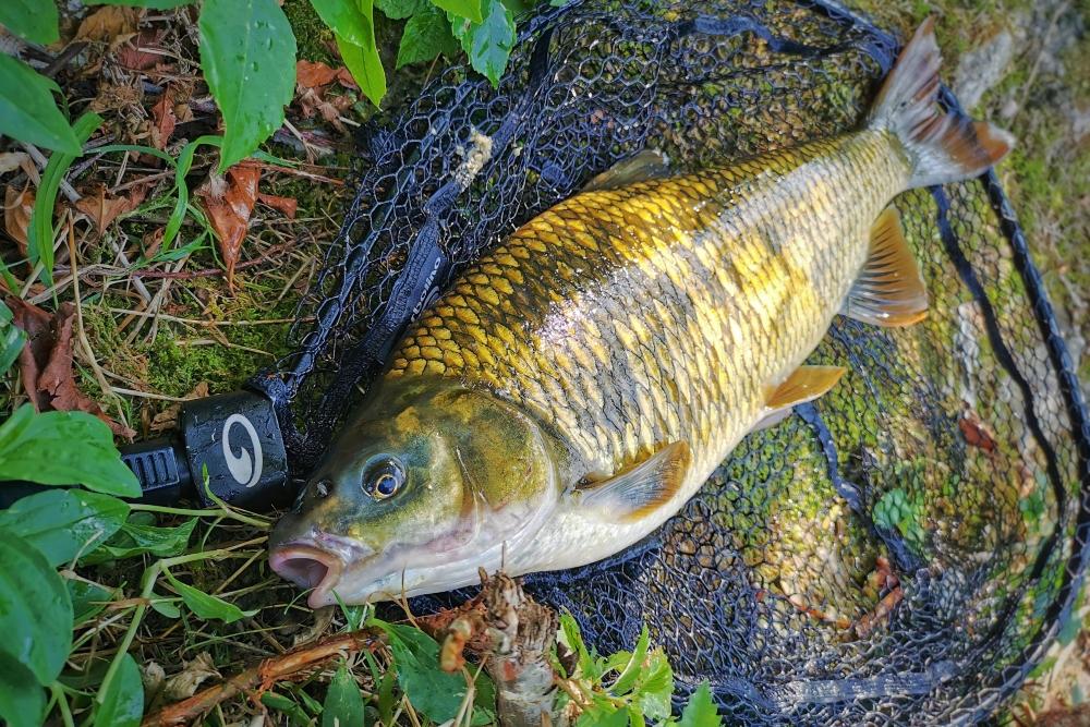 plotica ribolov 3