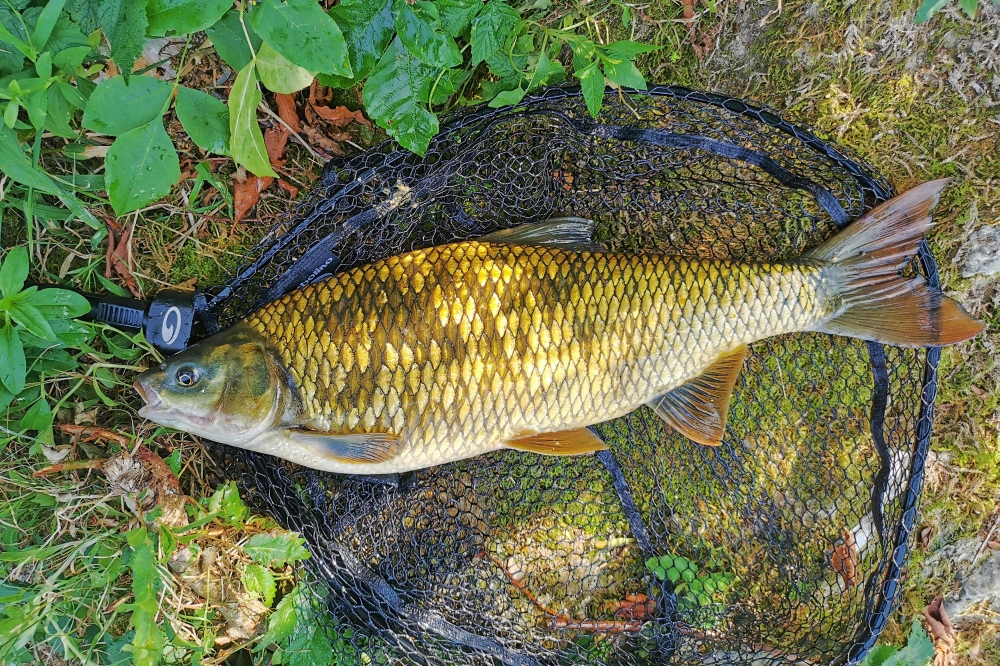 plotica ribolov 5