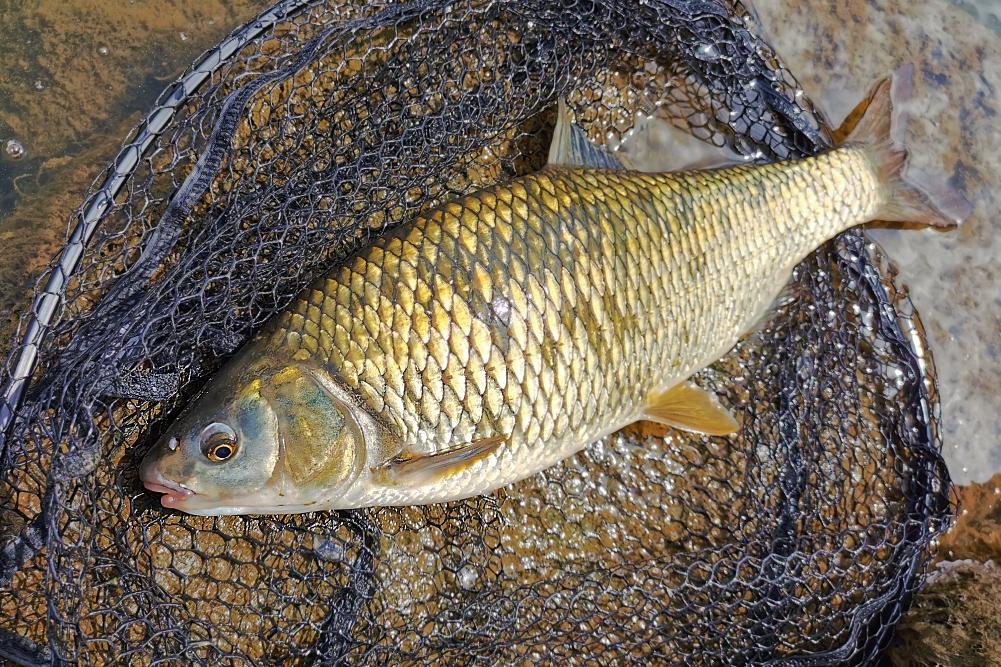 plotica ribolov 8