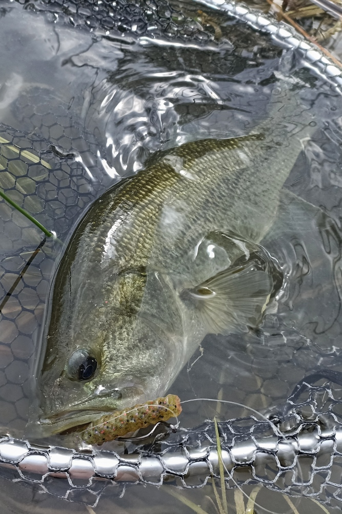 6th bass fishing lures
